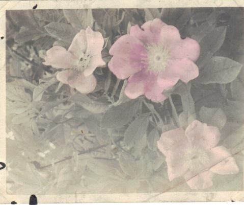 Lewis Reed hand colored photograph