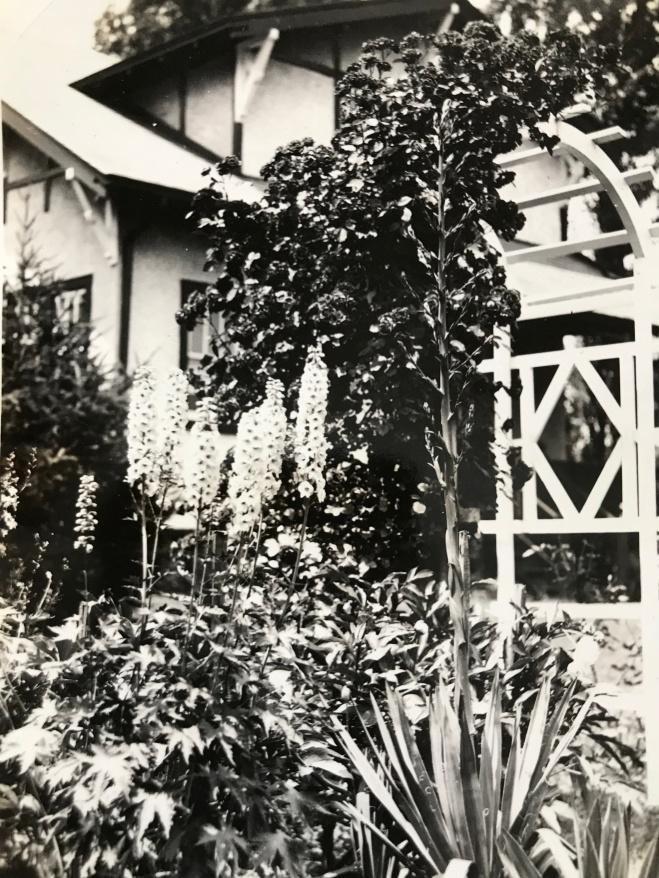 Backyard Trellis