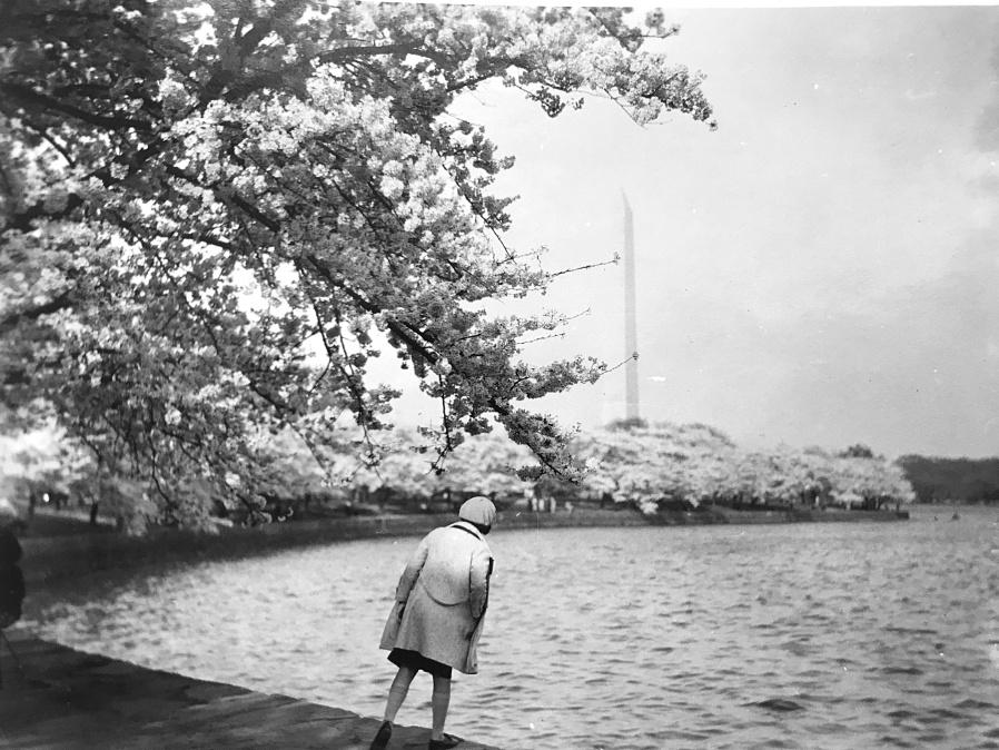 1930s DC Cherry Blossoms