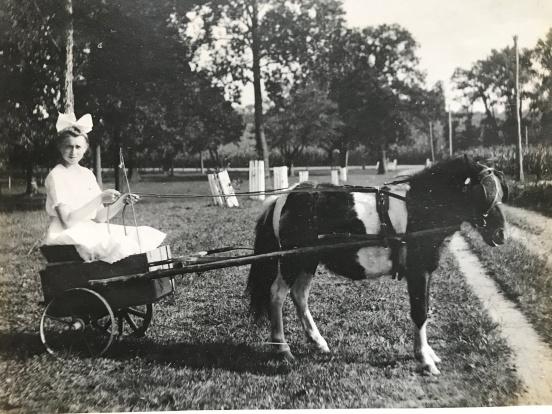 2-wheeled pony cart