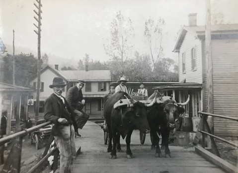 1911 Oxen pulling cart
