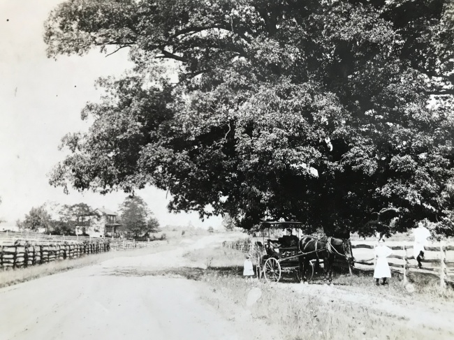 Hunting Hill 1911